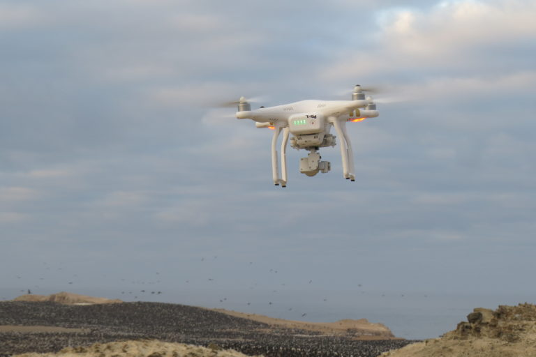 tecnología y aves marinas