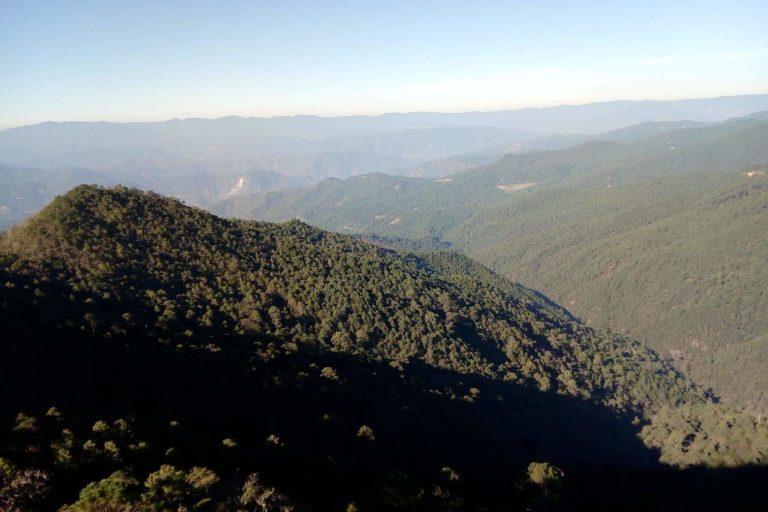 Imágen panorámica de los bosques de la Sierra Juarez de Oaxaca