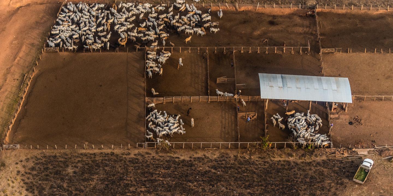 ganadería brasil