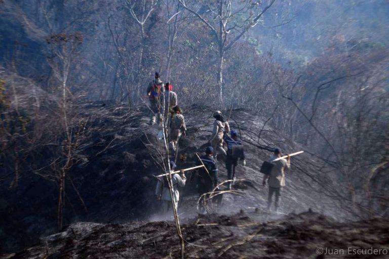 Incendios en Venezuela. Los bomberos usan rastrillos y batidores para eliminar los focos de fuego en las montañas pues no tienen agua. Foto: Inparques.