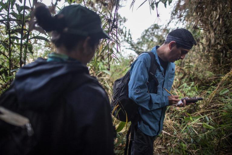 Día Internacional del Tapir Las investigaciones en el Santuario Nacional Tabaconas Namballe se iniciaron en el 2014. Foto: WWF.