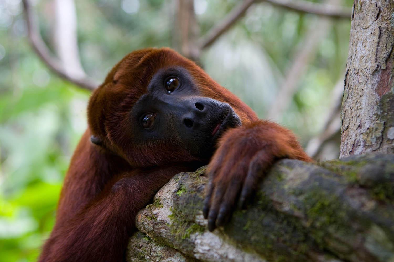 centro de rescate animal perú