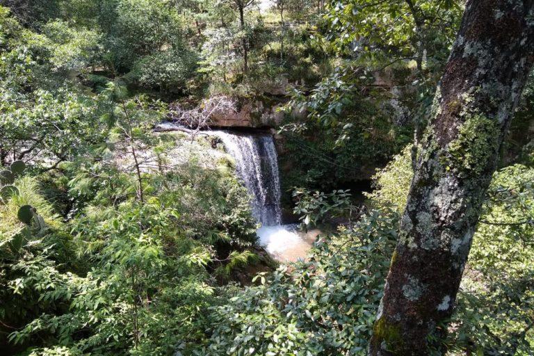 Bosques del noroeste de Durango, México