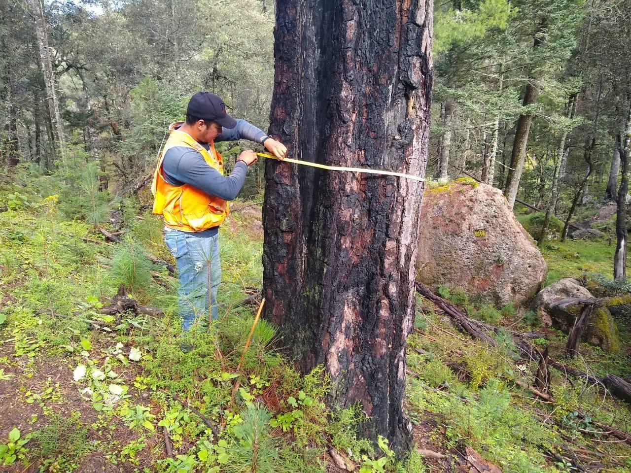 Bosques del noroeste de Durango