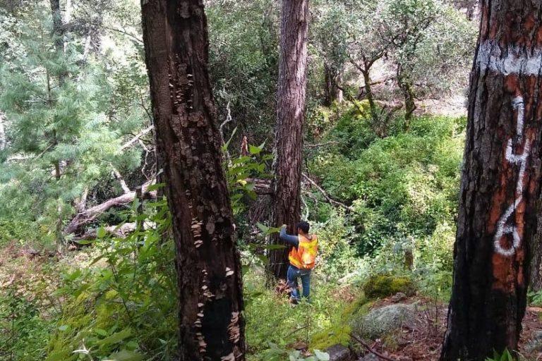 Bosques templados en Durango, México