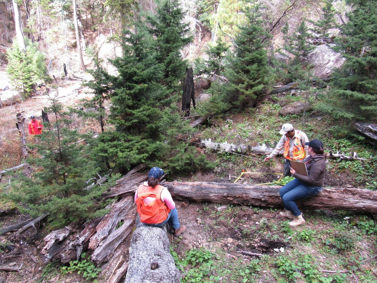 Durango, manejo forestal comunitario