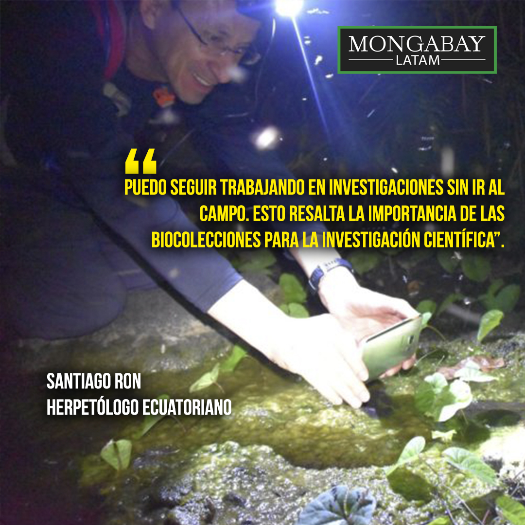 Composición de Mongabay Latam a partir de fotografía de Santiago Ron. Foto: achivo personal