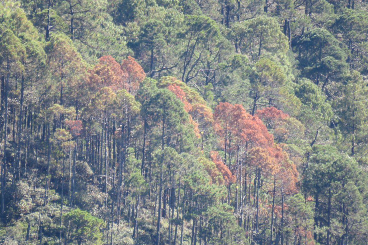 Bosques comunitarios en México