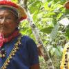 COVID 19 en indígenas de Ecuador. Miembros de la nacionalidad siekopai en territorio ancestral siekopai, Amazonia ecuatoriana. Foto Amazon Frontlines y Alianza Ceibo.