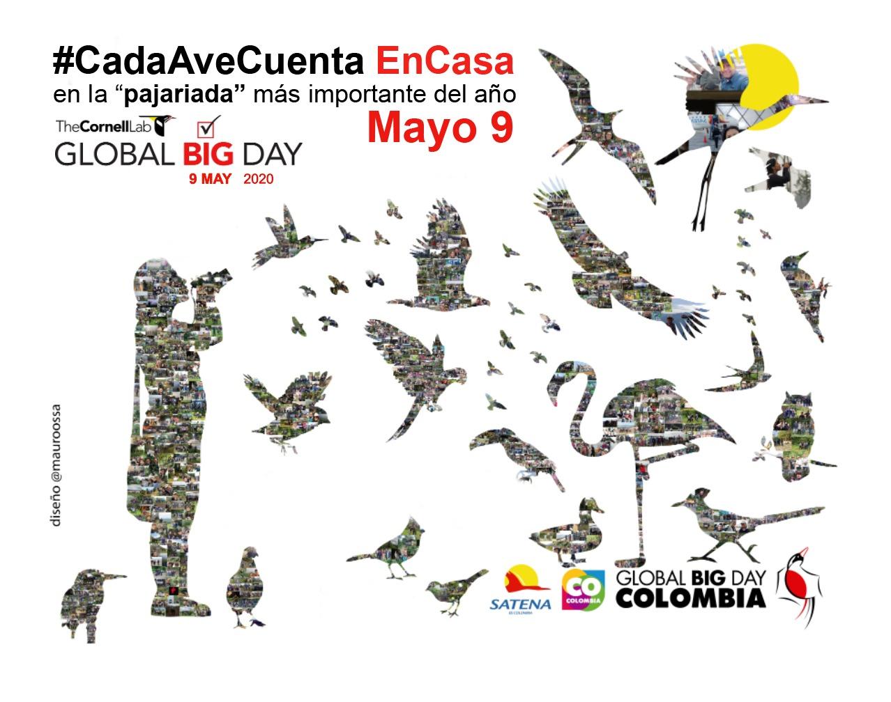El afiche del Global Big Day Colombia de este año se hizo con las fotografías de las aves registradas en la competencia del 2019. Imagen: Mauricio Ossa.