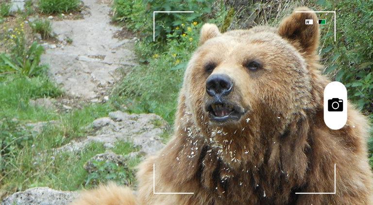 composición a partir de la foto de un oso pardo. Crédito: Nixinova / Wikimedia Commons.