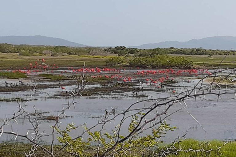 Proyecto turístico en humedal. Flamencos, garzas y muchas otras aves migratorias llegan a Cuare para alimentarse y reproducirse. Foto: Alfredo Campos Loaiza.