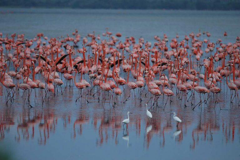 Proyecto turístico en humedal. El proyecto turístico afectaría un humedal Ramsar, sitio importante para aves acuáticas. Foto: Frank Espinoza.