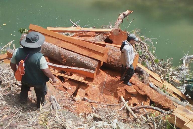 parque amobló tala ilegal