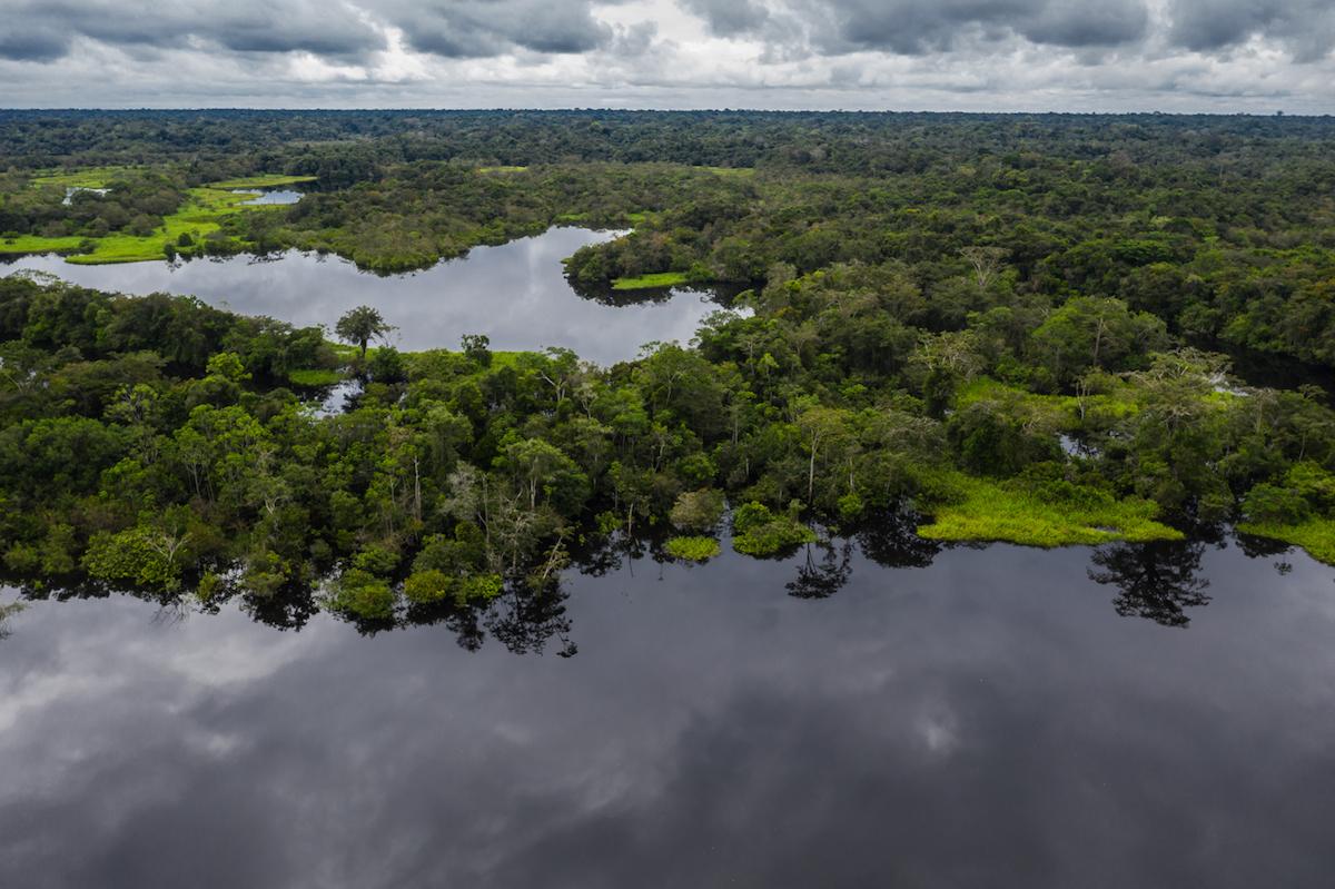 jaguares latinoamerica conservación