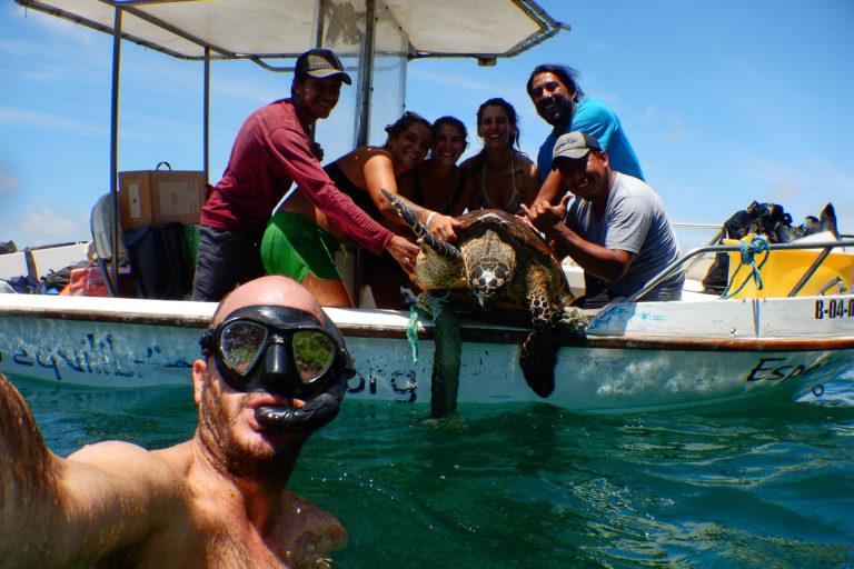 Conservación tortugas carey. La tortuga carey está en peligro pues su caparazón es muy apetecido para artesanías.Foto: Equilibrio Azul/ @equilibrioazul