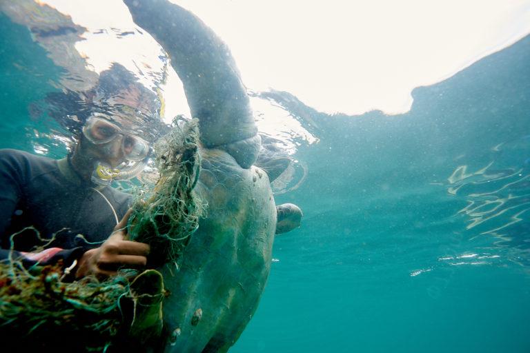 Conservación tortugas carey. Los investigadores ayudan a tortugas que quedan atrapadas en redes. Foto: Equilibrio Azul/ @equilibrioazul