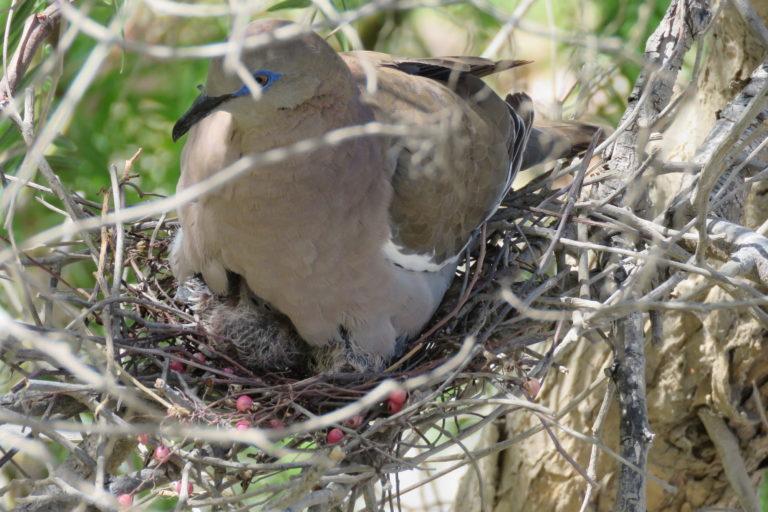 Perú quedó en segundo lugar en el número de registros de especies de aves. Foto: Fernando Angulo.
