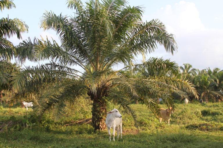 Existe preocupación entre los científicos por el cambio de paisaje debido a la presencia de agricultura y ganadería. Foto: Camila González.