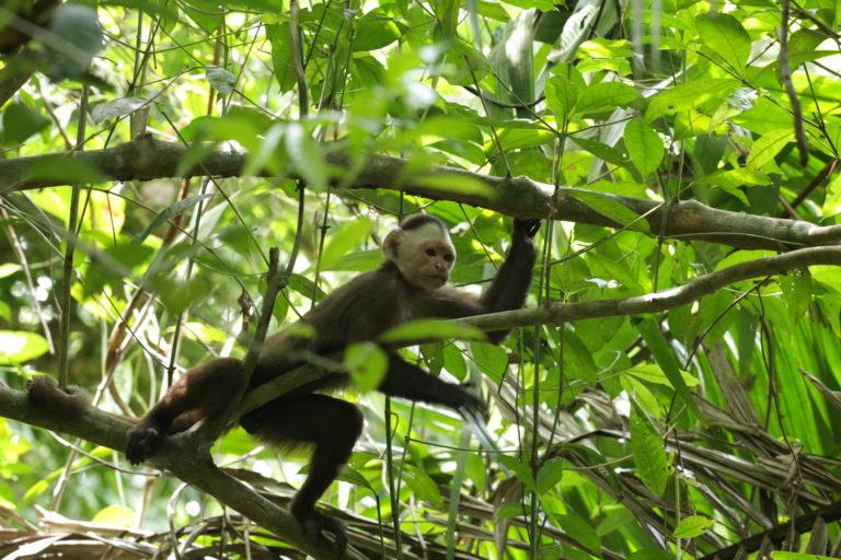 Camila Gonzalez tambien ha estudiado la presencia de patógenos en primates. Foto: Camila Gonzales.