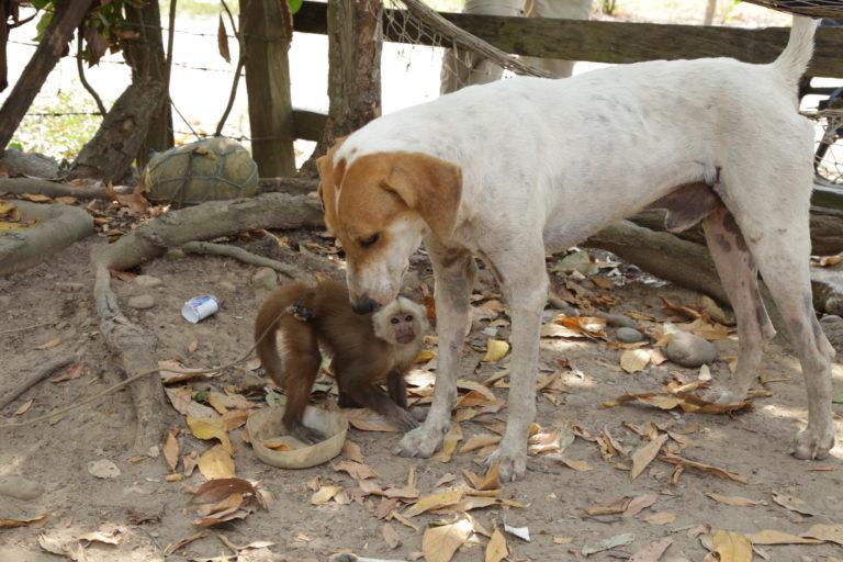 Los virus pueden transmitirse de los animales silvestres a los domésticos. Foto: Camila Gonzalez.