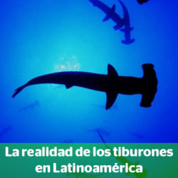 Composición a partir de una imagen de un tiburón martillo. Foto original: Oceana
