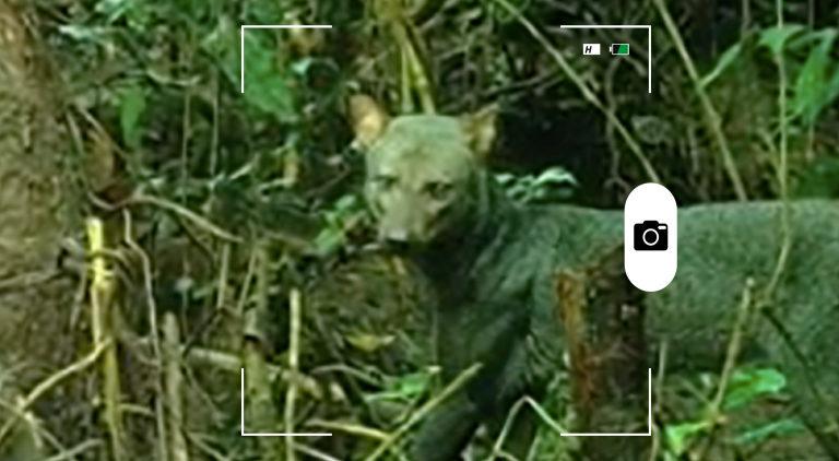composición a partir de captura de video de un perro de orejas cortas. Crédito: Sam McHugh.