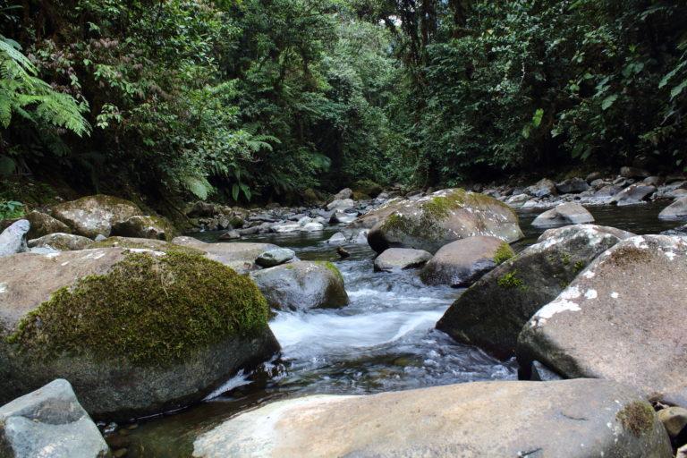 Conservación de orquídeas. Cuerpo de agua en la reserva Drácula. Foto: Marco F. Monteros - Ecominga.