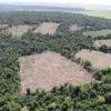 Bosque Atlántico de Paraguay