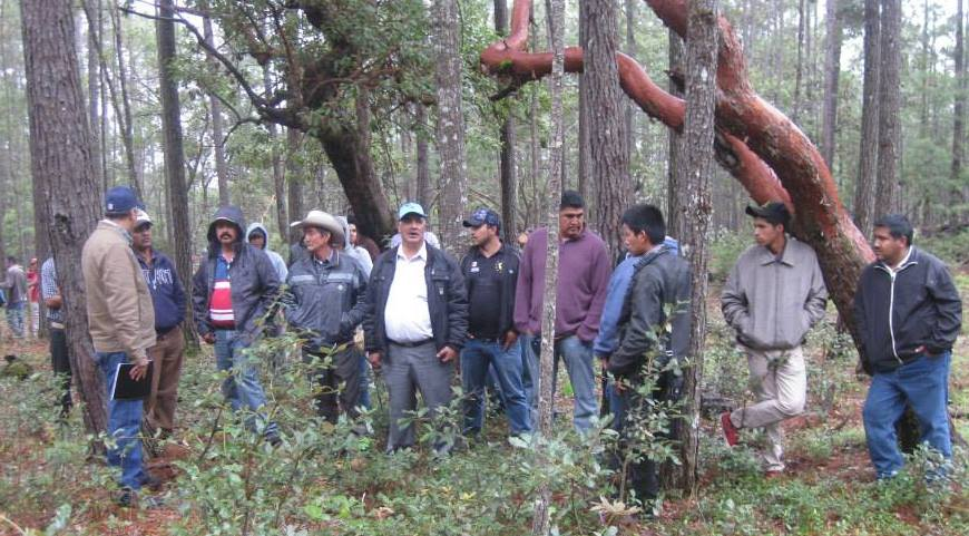 Manejo forestal en Jalisco