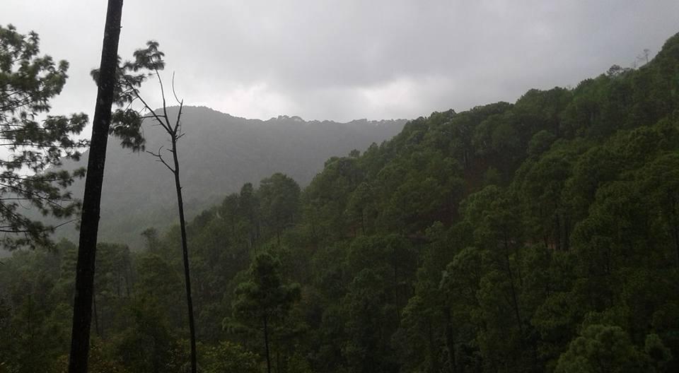 Bosques del sur de Jalisco