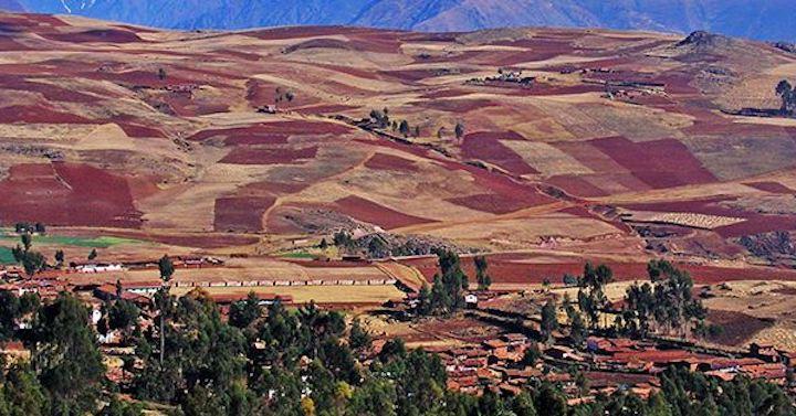 Las leyes bolivianas no permiten la introducción de semillas que afecten la biodiversidad. Foto: Fundación Tierra.