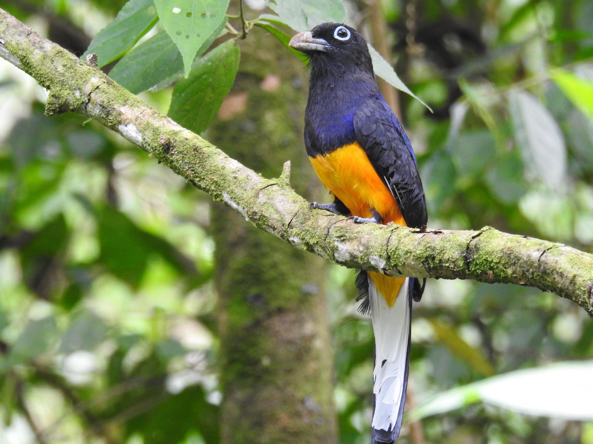 Erradicación de cultivos. La Serranía de las Quinchas es una Área Importante para la Conservación de las Aves (AICA). Foto: Camilo Altamar.