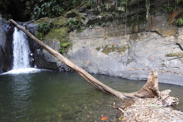 Erradicación de cultivos. Quebrada La Cristalina. Foto: Camilo Altamar.