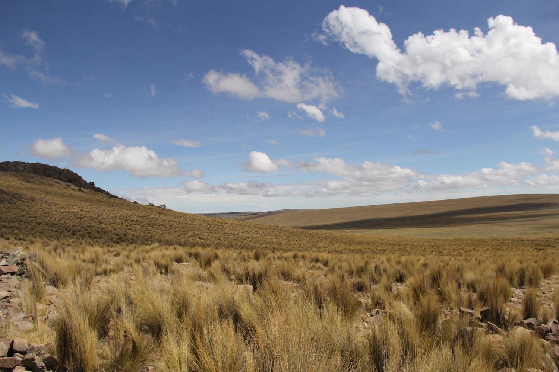 vicuñas caza perú