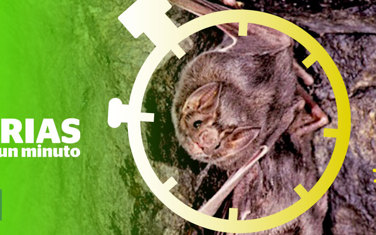 Composición a partir de una imagen de Desmodus rotundus, vampiro común que habita desde el sur de EEUU hasta el sur de Sudamérica. Foto: MerlinTuttle.org / Merlin Tuttle's Bat Conservation.