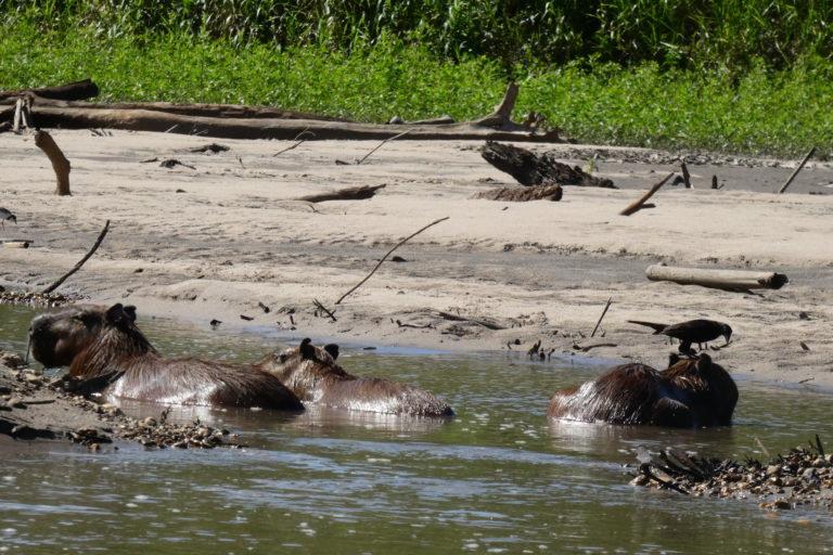 Día Mundial del Ambiente El Manu es una de las áreas reservadas más biodiversas del mundo. Foto: Beto Bravo.