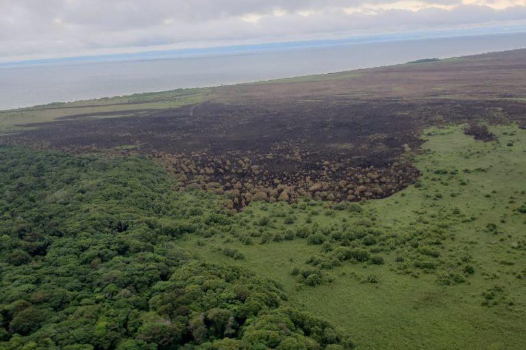 Incendios en Urabá. La zona quemada hacía parte de ecosistema de humedal. Foto: Dapard.