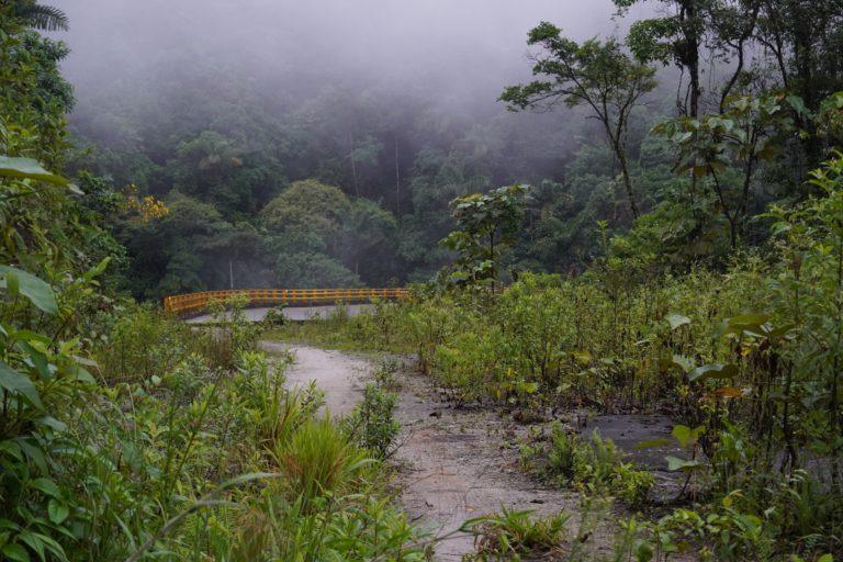 El puente se estrella contra la reserva forestal, la obra esta inconclusa. La vía previa, entregada en 2017, se está convirtiendo nuevamente en selva. Foto: María Fernanda Lizcano.