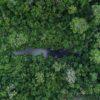 Concesiones forestales en la Reserva de la Biósfera Maya
