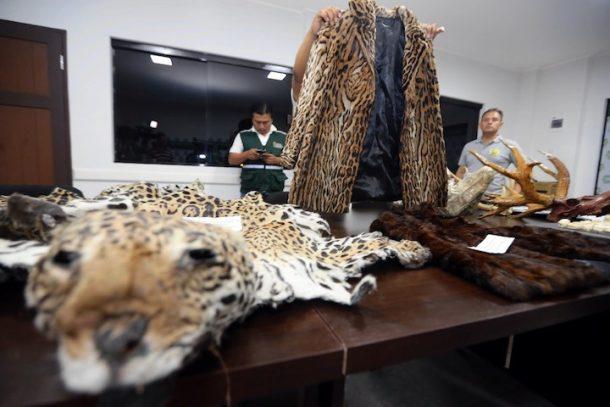 jaguares panorama américa del sur