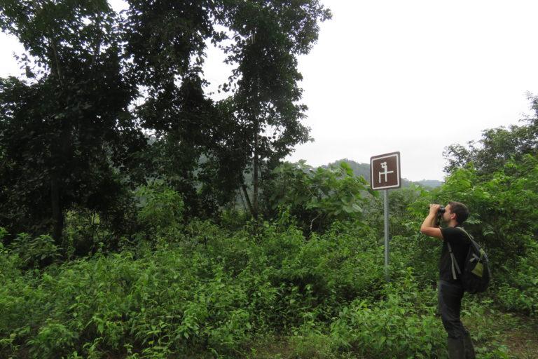 Conservación de aves. La Reserva Río Ayampe ha sido reforestada en su mayoría con árbol de pechiche. Foto: Cortesía Fundación Jocotoco.