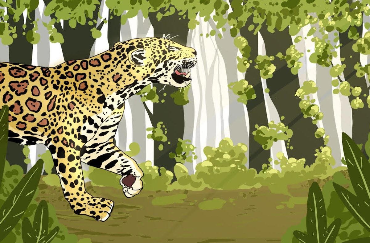 jaguares américa del sur