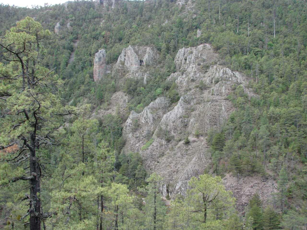 Bosques comunitarios de Durango