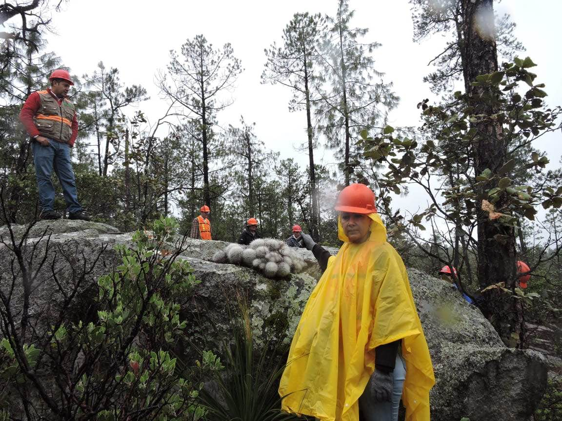 Bosques comunitarios en Durango