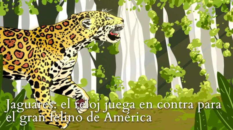 """Ilustración para especial """"Jaguares: el reloj juega en contra para el gran felino de América"""". Crédito: Kipu Visual"""