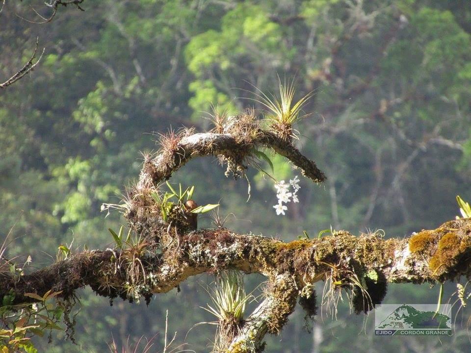Ejido Cordón Grande-Manejo forestal en Guerrero
