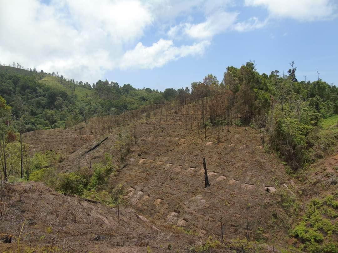 Terrenos donde se busca recuperar el bosque en Guerrero
