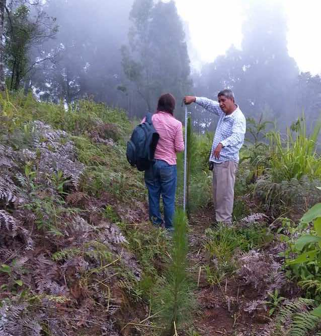 Manejo forestal en Guerrero