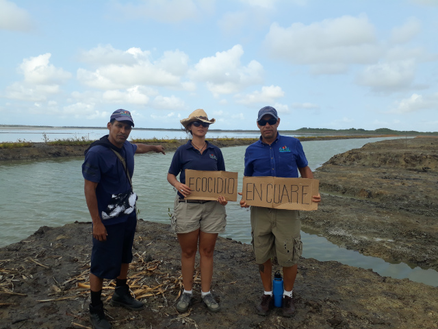 Crisis ONG Venezuela. En 2020 Azul Ambientalistas ha participado en la denuncia del ecocidio en el sitio Ramsar Cuare, en el estado Falcón. Foto: Azul Ambientalistas.
